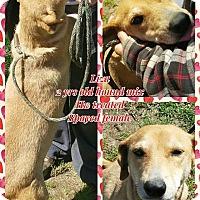 Adopt A Pet :: Liza - Ringwood, NJ