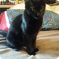 Adopt A Pet :: Sable - Phoenix, AZ