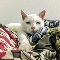 Adopt A Pet :: Einstein - Oakland, CA