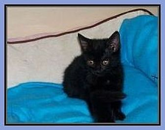 Adopt A Pet :: Kittens  - Virginia Beach, VA