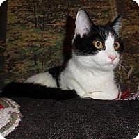 Adopt A Pet :: Zelda - Norwich, NY