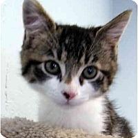Adopt A Pet :: Greta - Modesto, CA