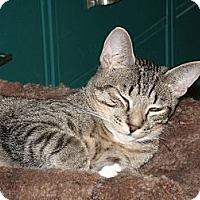 Adopt A Pet :: Garcia - Scottsdale, AZ