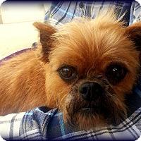 Adopt A Pet :: TABASCO - ADOPTION PENDING - Seymour, MO