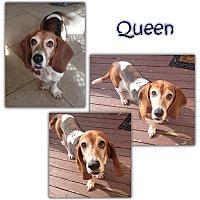 Adopt A Pet :: Queen - Marietta, GA