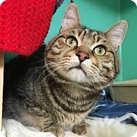 Adopt A Pet :: Gucci - Bellevue, WA