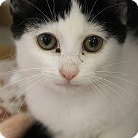 Adopt A Pet :: Ada - Medina, OH