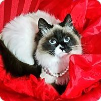 Adopt A Pet :: Freya - Fairborn, OH