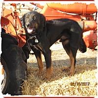 Adopt A Pet :: Chevy - Parker, KS