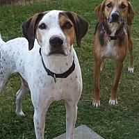 Adopt A Pet :: Linus - Austin, TX