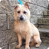 Adopt A Pet :: August is in Rhode Island! - Harrisonburg, VA