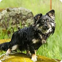 Adopt A Pet :: Marco - Auburn, CA