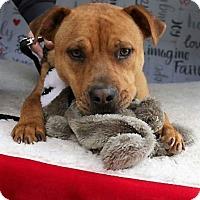 Adopt A Pet :: Sammi - Fort Worth, TX