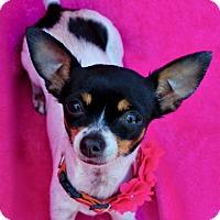 Adopt A Pet :: Sallie - Irvine, CA