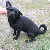 Adopt A Pet :: Mohawk - Saddle Brook, NJ