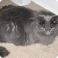 Adopt A Pet :: Platinum - Laguna Woods, CA