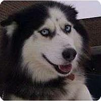 Adopt A Pet :: Carly - Belleville, MI