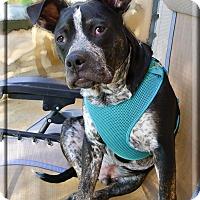 Adopt A Pet :: Mahigan family raised - Sacramento, CA