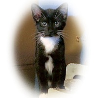 Adopt A Pet :: Liam - Olmsted Falls, OH