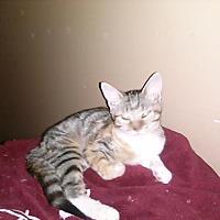 Adopt A Pet :: Seabreeze - Loganville, GA