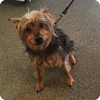 Adopt A Pet :: Charlie - Richmond, VA