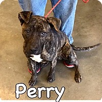 Adopt A Pet :: Perry-ADOPTED - Springfield, MA