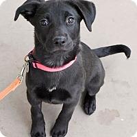 Adopt A Pet :: Lucy - PORTLAND, ME