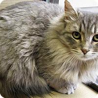 Adopt A Pet :: Mrs. Gray - Milwaukee, WI