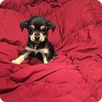 Adopt A Pet :: Jersey - Fresno, CA