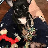 Adopt A Pet :: Grant - Wyoming, MI