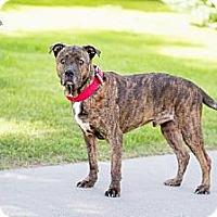 Adopt A Pet :: KJ - Chandler, AZ