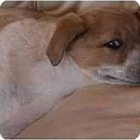 Adopt A Pet :: Jigger - Phoenix, AZ