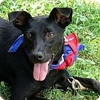 Adopt A Pet :: Cricket - Bluff city, TN