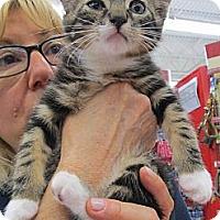 Adopt A Pet :: Mac - Riverhead, NY