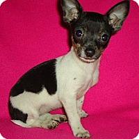 Adopt A Pet :: Macy - Allentown, PA