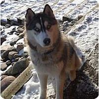 Adopt A Pet :: Kimber - Belleville, MI