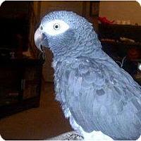Adopt A Pet :: SPICE - Mantua, OH