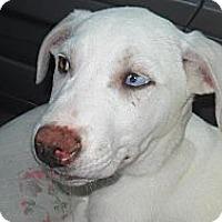Adopt A Pet :: Windy - Albany, NY