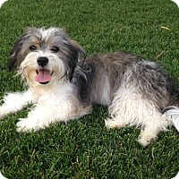 Adopt A Pet :: Fresca - Broomfield, CO