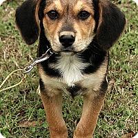 Adopt A Pet :: Ethan - Staunton, VA
