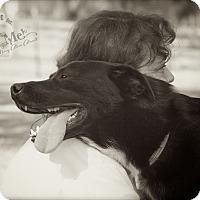 Adopt A Pet :: Tag - Albany, NY