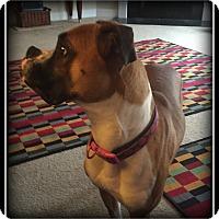 Adopt A Pet :: Chloe - Indian Trail, NC