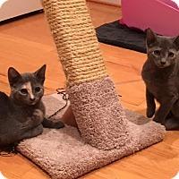 Adopt A Pet :: Ticia, Nina & Bear-Loveable - Arlington, VA