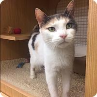 Adopt A Pet :: Kally - Wayne, PA
