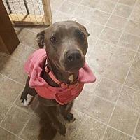 Adopt A Pet :: Sage - Durham, NC