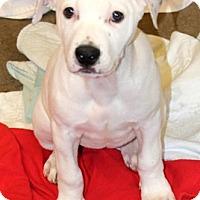 Adopt A Pet :: Payton - Harrison, NY