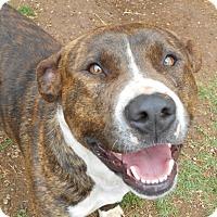 Adopt A Pet :: SCOUT - Duncan, OK
