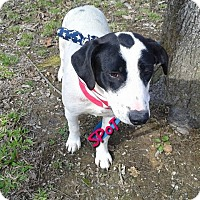 Adopt A Pet :: SPOT - Princeton, KY