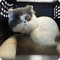 Adopt A Pet :: mizu - Beverly Hills, CA