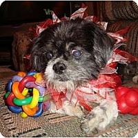 Adopt A Pet :: Uli - Madison, WI